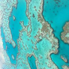 心形大堡礁用戶圖片