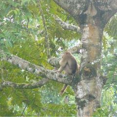 踏繽野生動物保護區用戶圖片