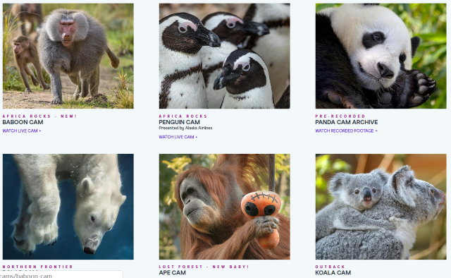 Amazing Free Virtual Zoo Tour & Free Museums Online on Your Couch (updated July 2020)