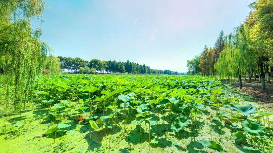 無錫十八灣風景區