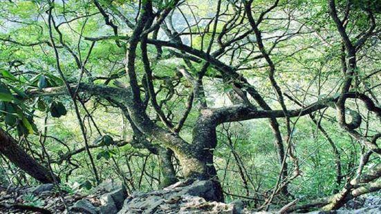 龍灘大峽谷國家森林公園