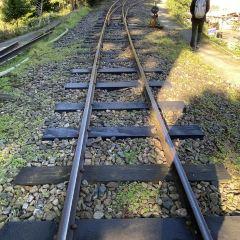 Alishan Forest Railway Garage Park User Photo