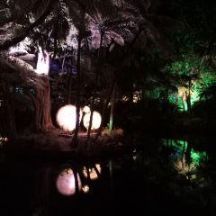 Pukekura Park User Photo