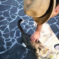 波上宮のユーザー投稿写真