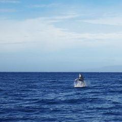 Maui Ocean Center User Photo
