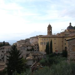 Assisi User Photo