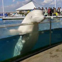 京急油壺海洋公園張用戶圖片