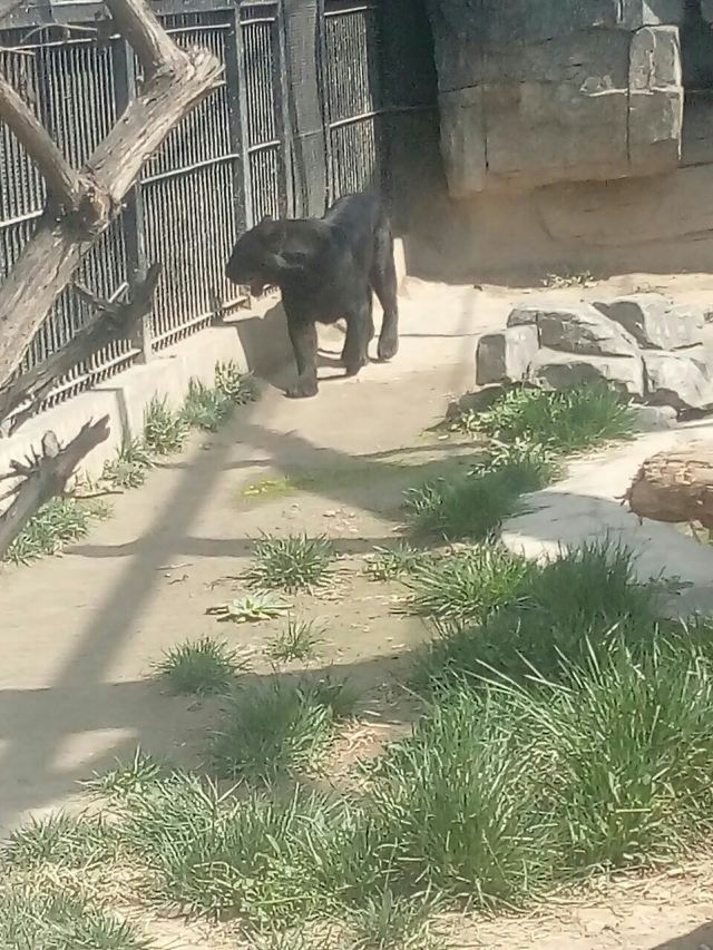 스자좡 도심 동물원