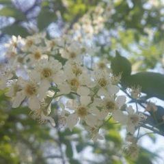 란저우 식물원 여행 사진