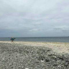 鴿子島用戶圖片