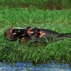 Okavango Delta User Photo