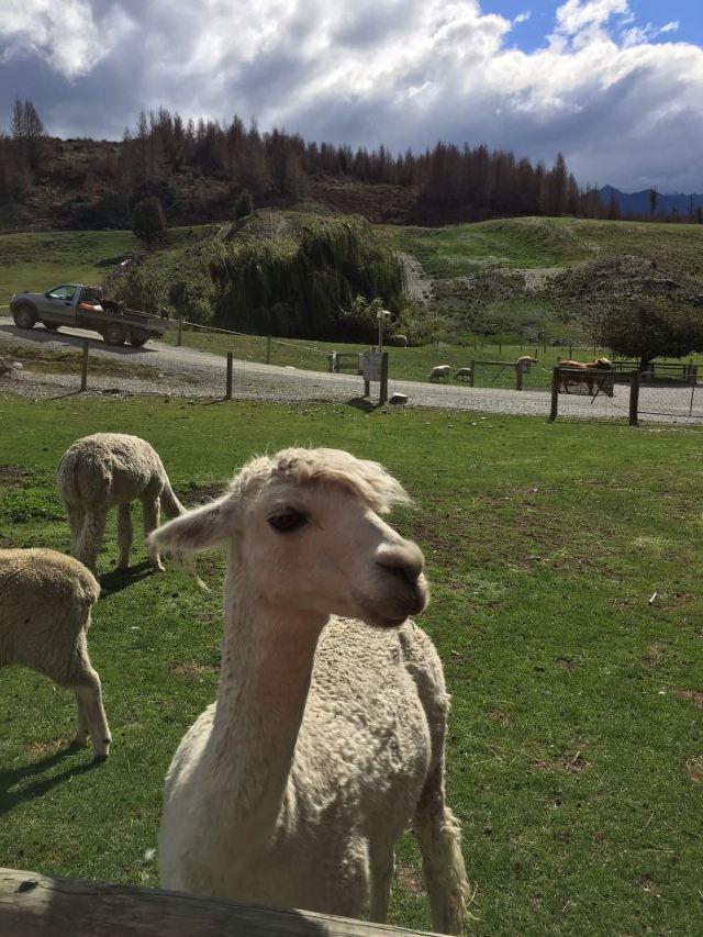 尼古拉斯山農場體驗