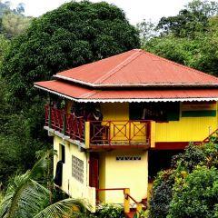 Hyde Park Tropical Garden User Photo