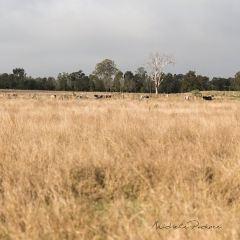 Oxley Creek Common User Photo