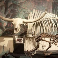 拉斯維加斯自然歷史博物館用戶圖片