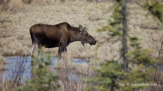 Moose Junction