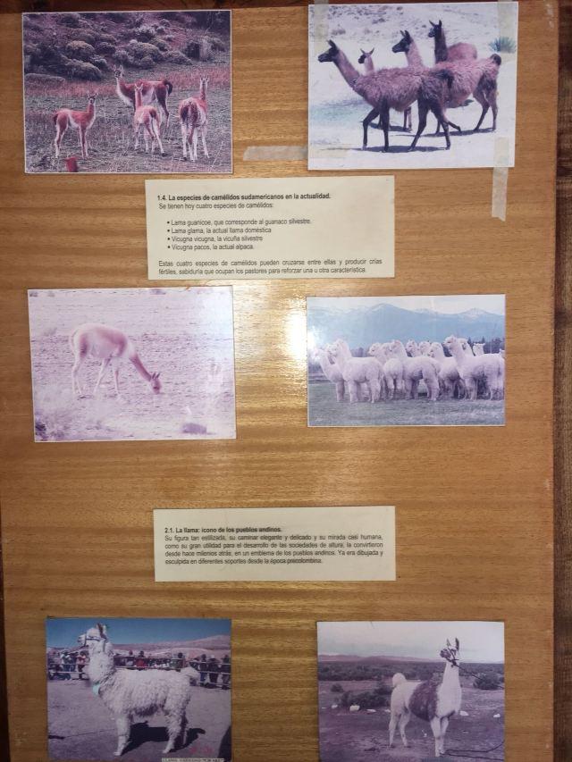 Alpaca Museum