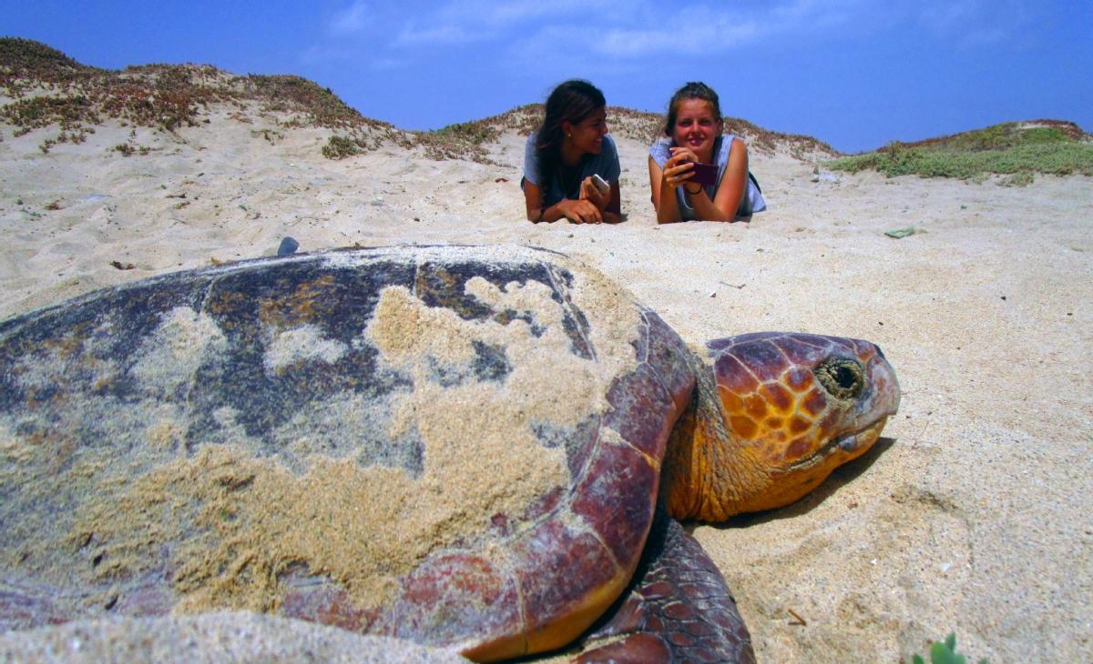 Project Biodiversity Turtle Conservation Hatchery
