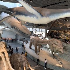 Shanghai Natural History Museum User Photo