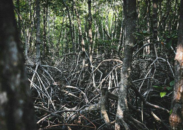 紅樹林保護區