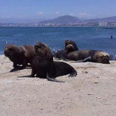 Playa El Faro User Photo