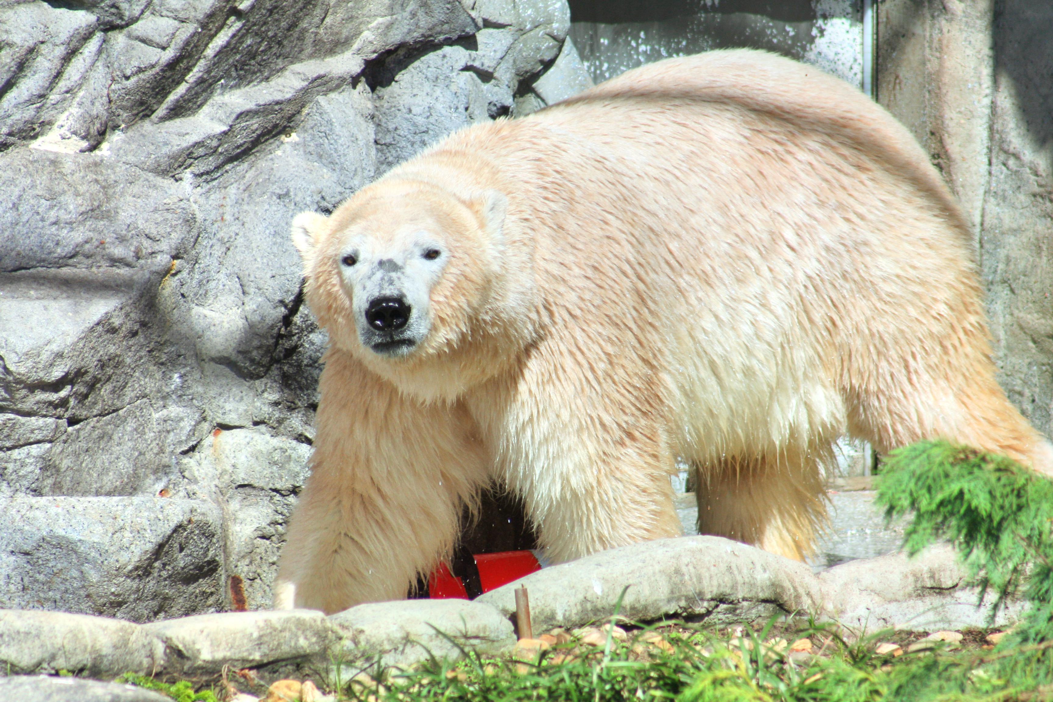 Mulhouse Zoological and Botanical Park (Parc Zoologique et Botanique de Mulhouse)