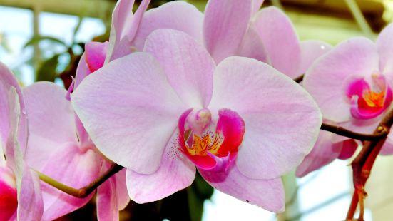 Phoenix Parc Floral de Nice