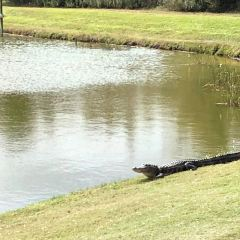 The Ritz-Carlton Golf Club, Orlando, Grande Lakes User Photo