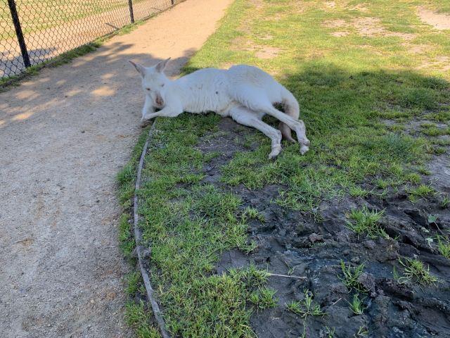 瑪璐考拉和動物公園