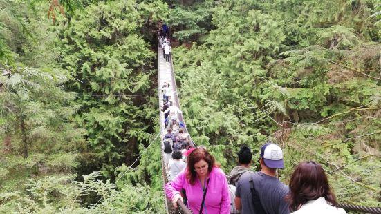 林恩峡谷公园又称为吊桥公园,在温哥华公园排名第二,位于北温哥