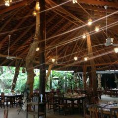 綠光森林餐廳張用戶圖片