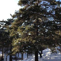 鳥語林用戶圖片