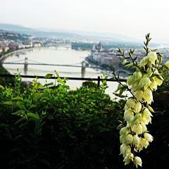 Gellért Hill User Photo