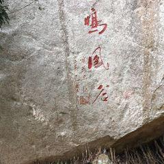 鳴鳳谷用戶圖片