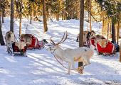 羅瓦涅米:北極線外與聖誕老人相約