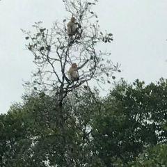 仙本那紅樹林用戶圖片