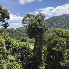 Colmar Tropicale User Photo
