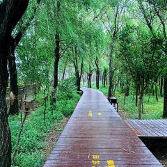 친황다오 해변 국립삼림공원 여행 사진