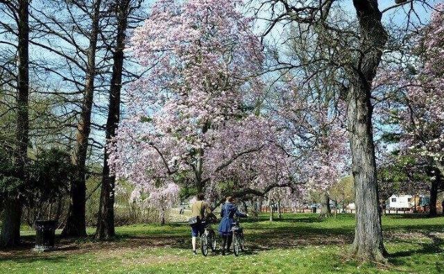 費爾芒特公園