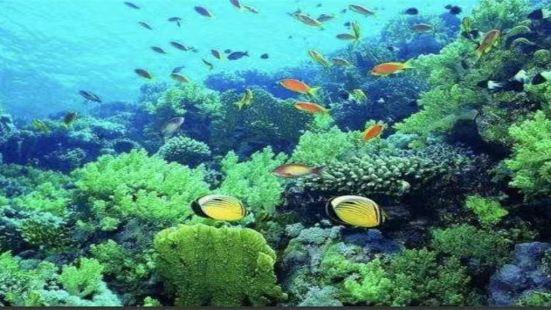 金圖海洋公園