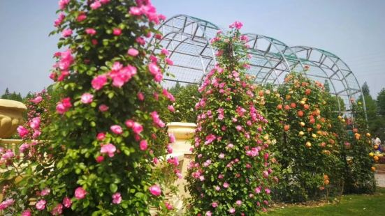 禾家歡玫瑰天堂