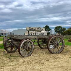 Emu Bay Lavender Farm User Photo