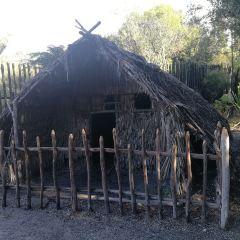 Maori Rock Carvings User Photo