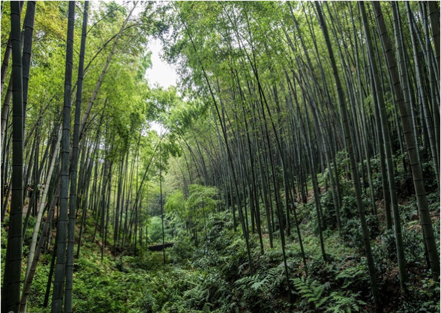 China's 10 Most Beautiful Pristine Forests