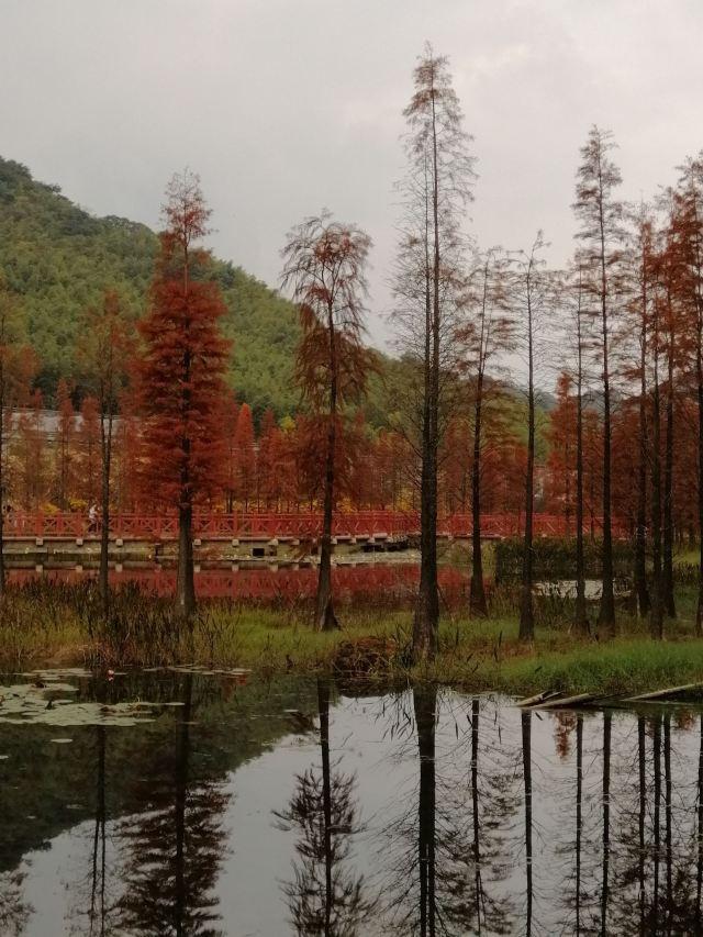 Jiashan National Forest Park