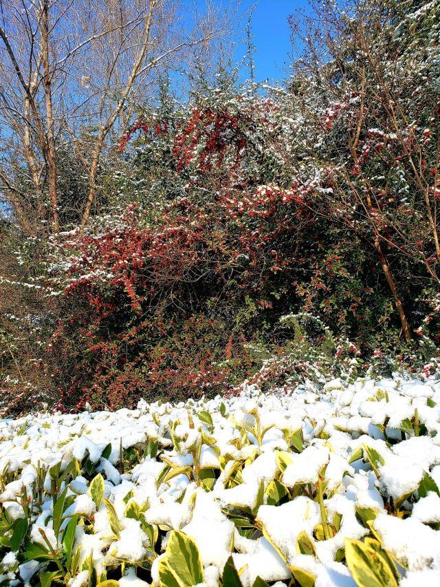 Rizhao Botanical Garden