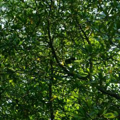 凱爾斯紅樹林保護區用戶圖片