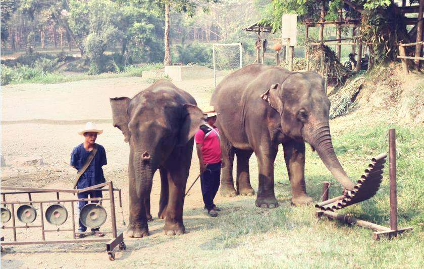 Ran Tong Save & Rescue Elephant Centre