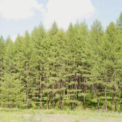 국가삼림공원 여행 사진