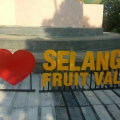 Selangor Fruits Valley用戶圖片
